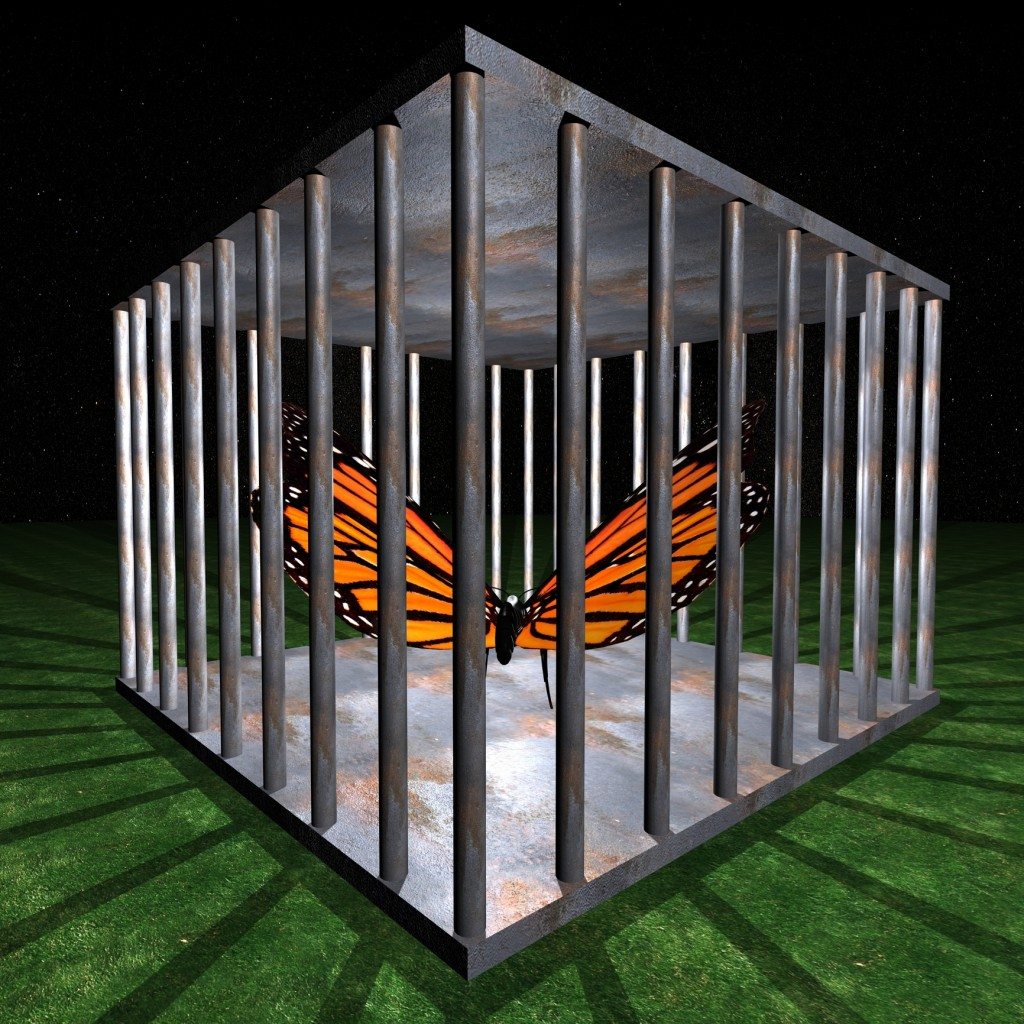 Butterfly Caged_1863444